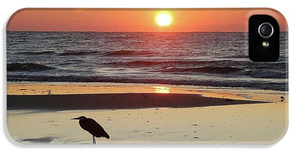 Crimson Tide iPhone 5 Cases - Heron Watching Sunrise iPhone 5 Case by Michael Thomas