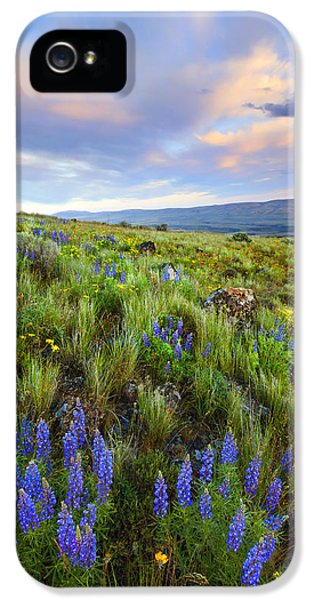 Lupine iPhone 5 Cases - High Desert Spring iPhone 5 Case by Mike  Dawson