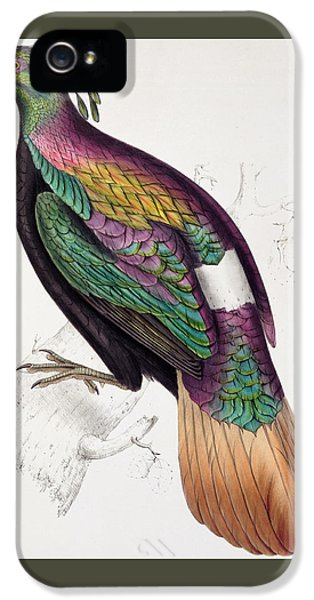 Himalayan Monal Pheasant IPhone 5 / 5s Case by John Gould