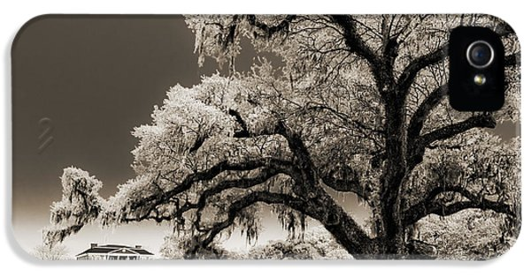 Historic Oak iPhone 5 Cases - Historic Drayton Hall in Charleston South Carolina Live Oak Tree iPhone 5 Case by Dustin K Ryan