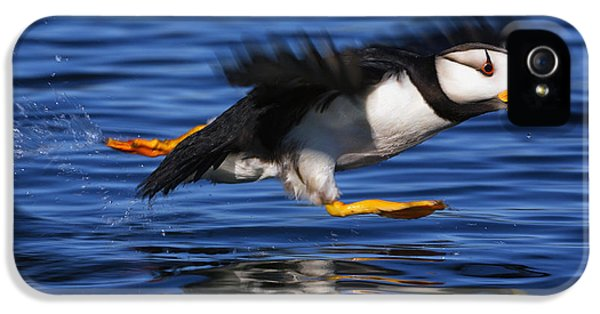 Mid iPhone 5 Cases - Horned Puffin  Fratercula Corniculata iPhone 5 Case by Marion Owen