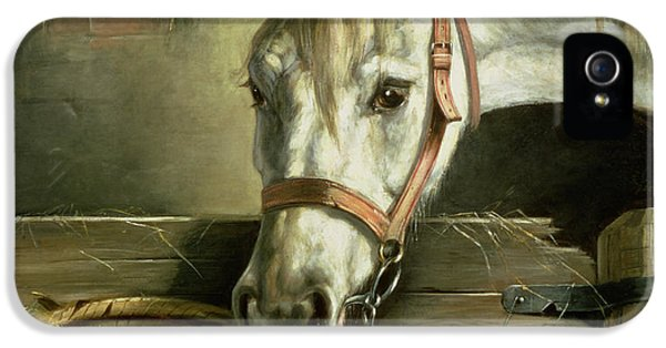 Horse And Kittens IPhone 5 / 5s Case by Moritz Muller