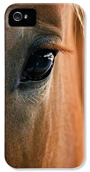 Modern Western iPhone 5 Cases - Horse Eye iPhone 5 Case by Adam Romanowicz
