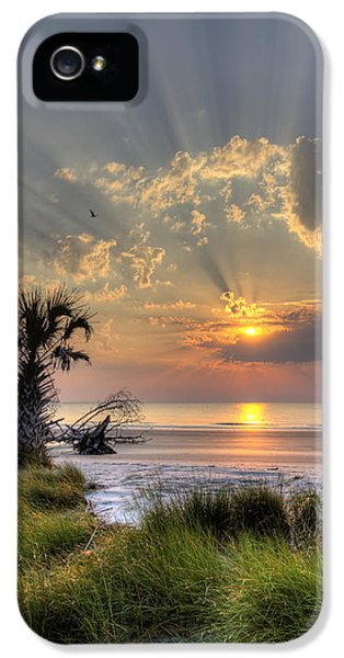 Hunting iPhone 5 Cases - Hunting Island SC Sunrise Palm iPhone 5 Case by Dustin K Ryan