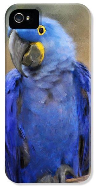 Hyacinth Macaw  IPhone 5 / 5s Case by Jai Johnson