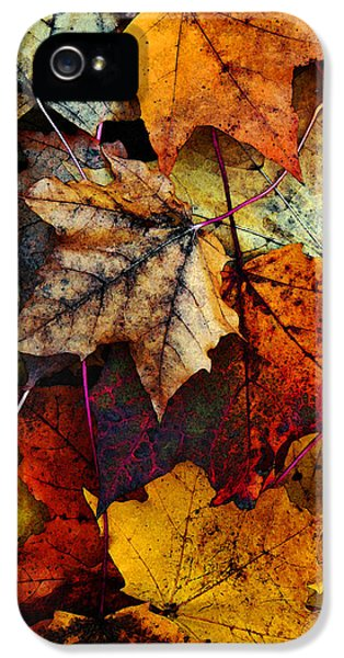 I Love Fall 2 IPhone 5 / 5s Case by Joanne Coyle