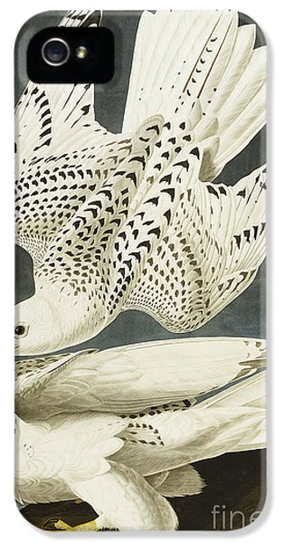 Iceland Or Jer Falcon IPhone 5 / 5s Case by John James Audubon