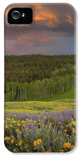 Idaho Spring IPhone 5 / 5s Case by Leland D Howard