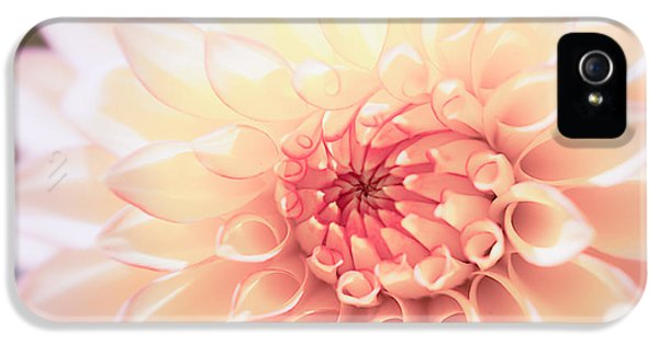 Flower iPhone 5 Cases - In Love with Dahlia iPhone 5 Case by Ana V  Ramirez