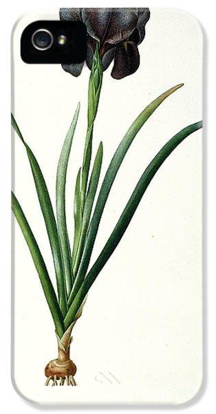 Iris Luxiana IPhone 5 / 5s Case by Pierre Joseph  Redoute