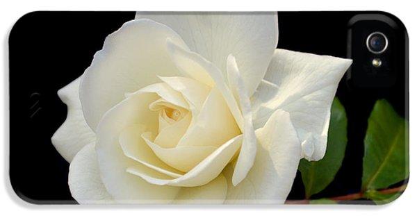 Ivory Rose iPhone 5 Cases - Ivory Rose. iPhone 5 Case by Terence Davis