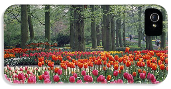Keukenhof Garden, Lisse, The Netherlands IPhone 5 / 5s Case by Panoramic Images