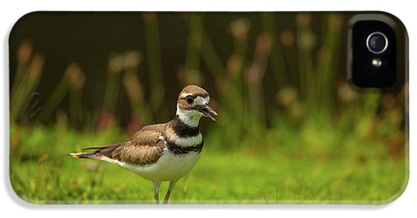 Killdeer IPhone 5 / 5s Case by Karol Livote