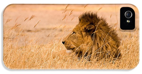 Lion iPhone 5 Cases - King of The Pride iPhone 5 Case by Adam Romanowicz
