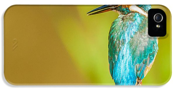 Kingfisher IPhone 5 / 5s Case by Paul Neville