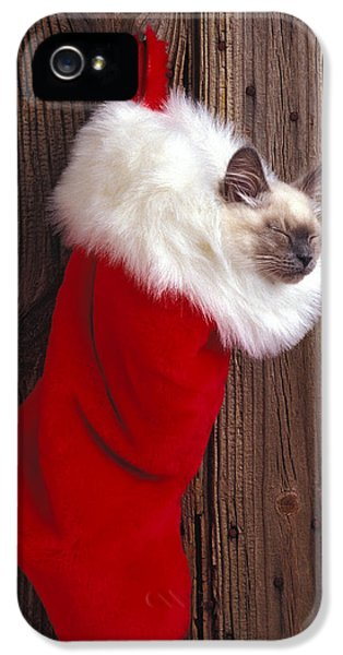 Juvenile iPhone 5 Cases - Kitten in stocking iPhone 5 Case by Garry Gay