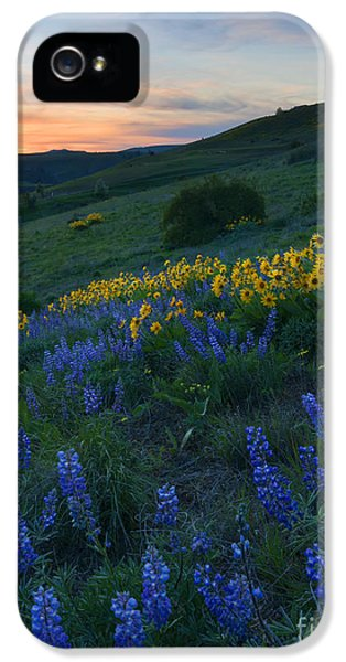 Lupine iPhone 5 Cases - Kittitas Wildflower Sunset iPhone 5 Case by Mike Dawson