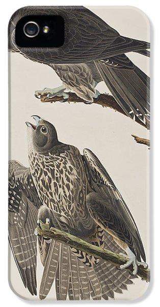 Labrador Falcon IPhone 5 / 5s Case by John James Audubon
