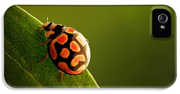 Ladybug  On Green Leaf IPhone 5 / 5s Case by Johan Swanepoel
