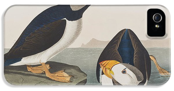 Large Billed Puffin IPhone 5 / 5s Case by John James Audubon