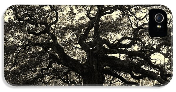 Historic Oak iPhone 5 Cases - Last Angel Oak 72 iPhone 5 Case by Susanne Van Hulst