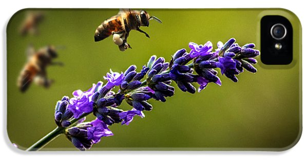Bee iPhone 5 Cases - Lavender iPhone 5 Case by Martin Newman