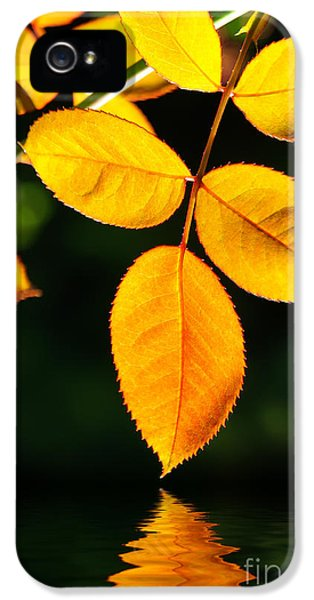 Leaf iPhone 5 Cases - Leafs over water iPhone 5 Case by Carlos Caetano