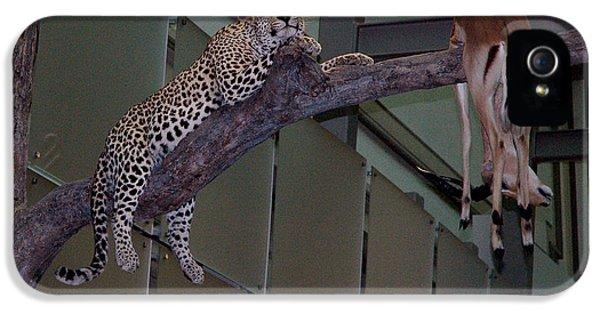 National Museum Of America History iPhone 5 Cases - Leopard Tree Cat Preying iPhone 5 Case by LeeAnn McLaneGoetz McLaneGoetzStudioLLCcom