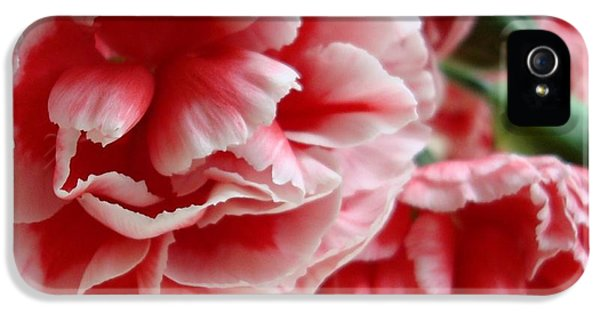 Carnations iPhone 5 Cases - Les Jolis Petales iPhone 5 Case by Kathy Bucari
