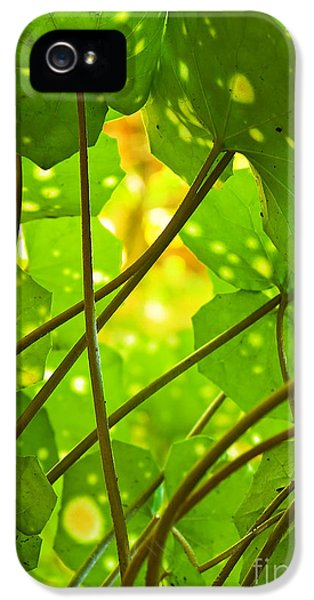 Chlorophyll iPhone 5 Cases - Ligularia Tussilaginea iPhone 5 Case by Carlos Caetano
