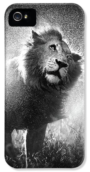 Lion Shaking Off Water IPhone 5 / 5s Case by Johan Swanepoel