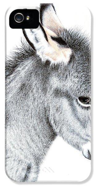 Donkey iPhone 5 Cases - Little Donkey iPhone 5 Case by Sandra Moore