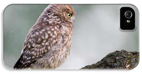 Little Owl Chick Practising Hunting Skills IPhone 5 / 5s Case by Roeselien Raimond