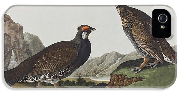 Long-tailed Or Dusky Grous IPhone 5 / 5s Case by John James Audubon