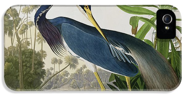 Louisiana Heron IPhone 5 / 5s Case by John James Audubon