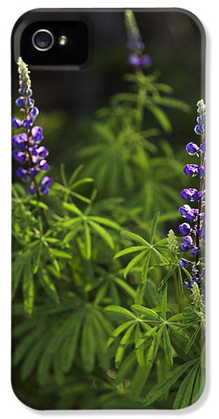 Lupine iPhone 5 Cases - Lupine iPhone 5 Case by Chad Dutson
