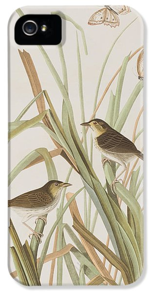 Macgillivray's Finch  IPhone 5 / 5s Case by John James Audubon