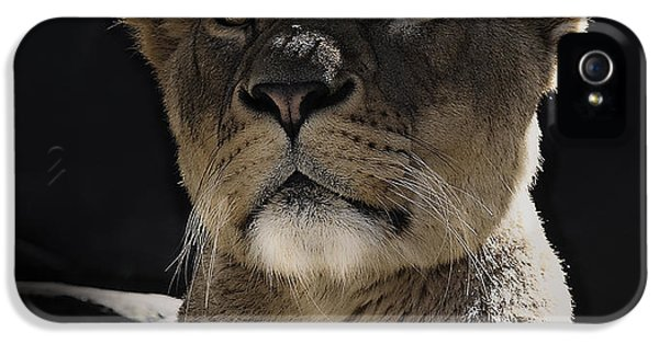 Beautiful Day iPhone 5 Cases - Magnificent lioness iPhone 5 Case by Sheila Smart
