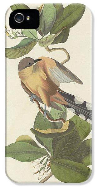Mangrove Cuckoo IPhone 5 / 5s Case by John James Audubon