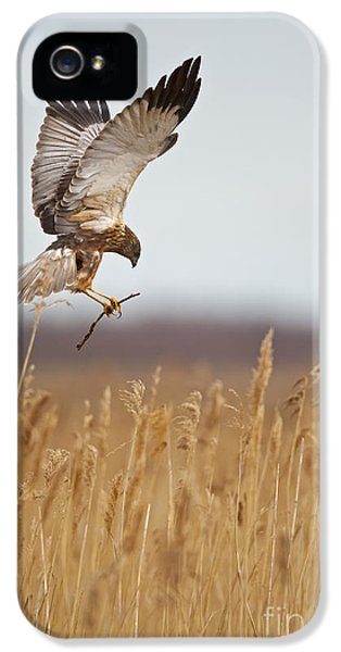 Marsh Harrier Building Nest IPhone 5 / 5s Case by Steen Drozd Lund