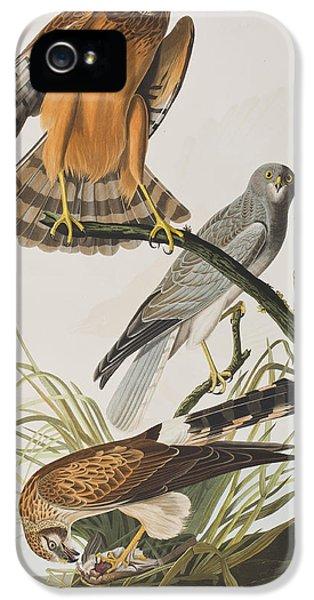 Hawk iPhone 5 Cases - Marsh Hawk iPhone 5 Case by John James Audubon
