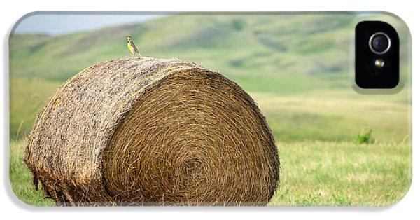 Meadowlark Heaven IPhone 5 / 5s Case by Todd Klassy