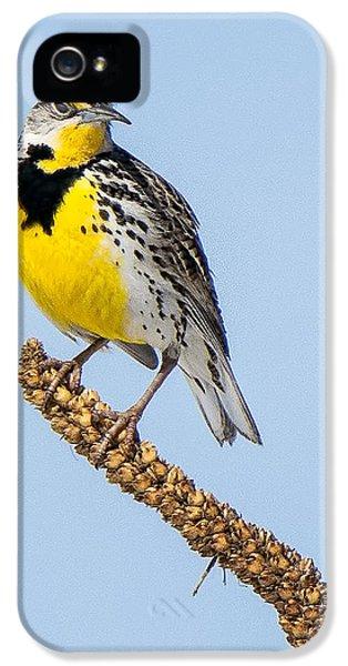 Meadowlark On Mullein Stalk IPhone 5 / 5s Case by Stephen Johnson