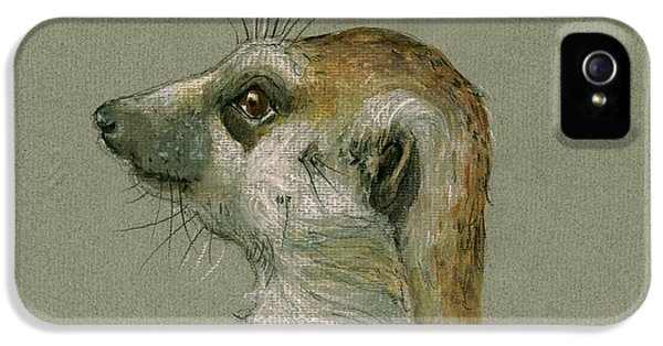 Meerkat Or Suricate Painting IPhone 5 / 5s Case by Juan  Bosco