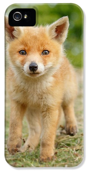 Fox Kits iPhone 5 Cases - Moi...? _Fox cub iPhone 5 Case by Roeselien Raimond