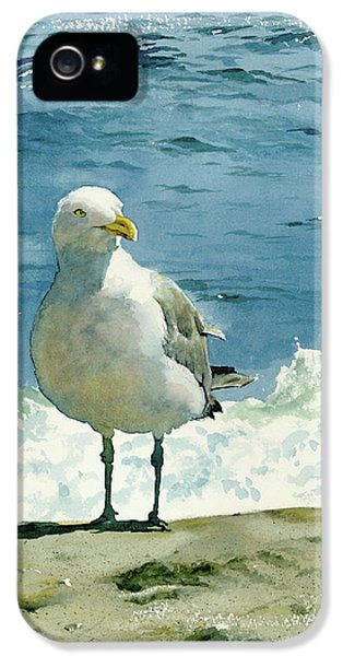 Montauk Gull IPhone 5 / 5s Case by Tom Hedderich