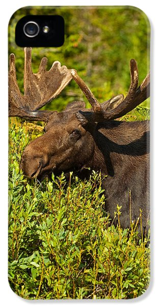 Moose IPhone 5 / 5s Case by Sebastian Musial
