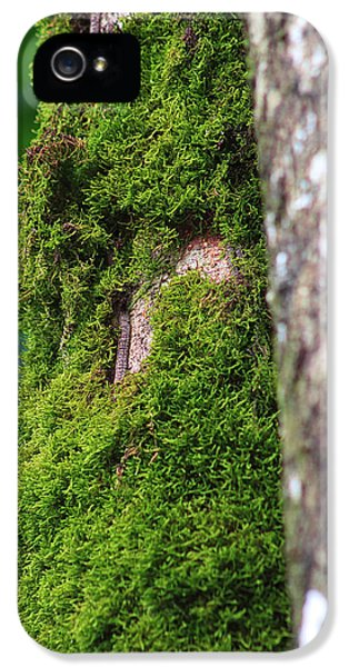 Decor iPhone 5 Cases - Mossy Tree iPhone 5 Case by Lynn L