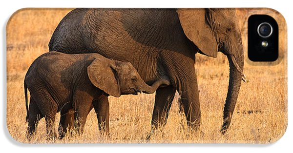 Conservation iPhone 5 Cases - Mother and Baby Elephants iPhone 5 Case by Adam Romanowicz