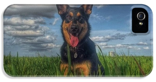 Hot Dog iPhone 5 Cases - Mr Darcy Squared iPhone 5 Case by I F Abbie Shores